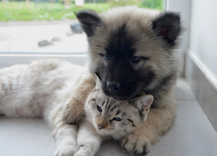 Diabetes in dogs and cats