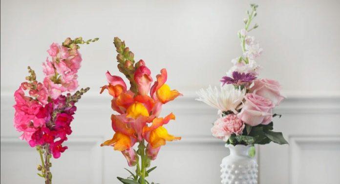 SnapBlooms Online Flower