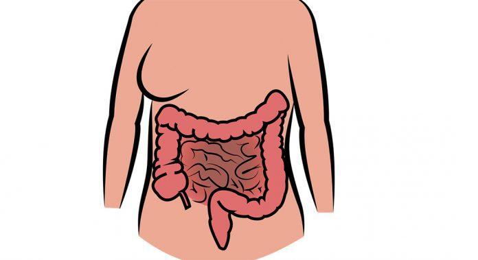 Digestive system healthy