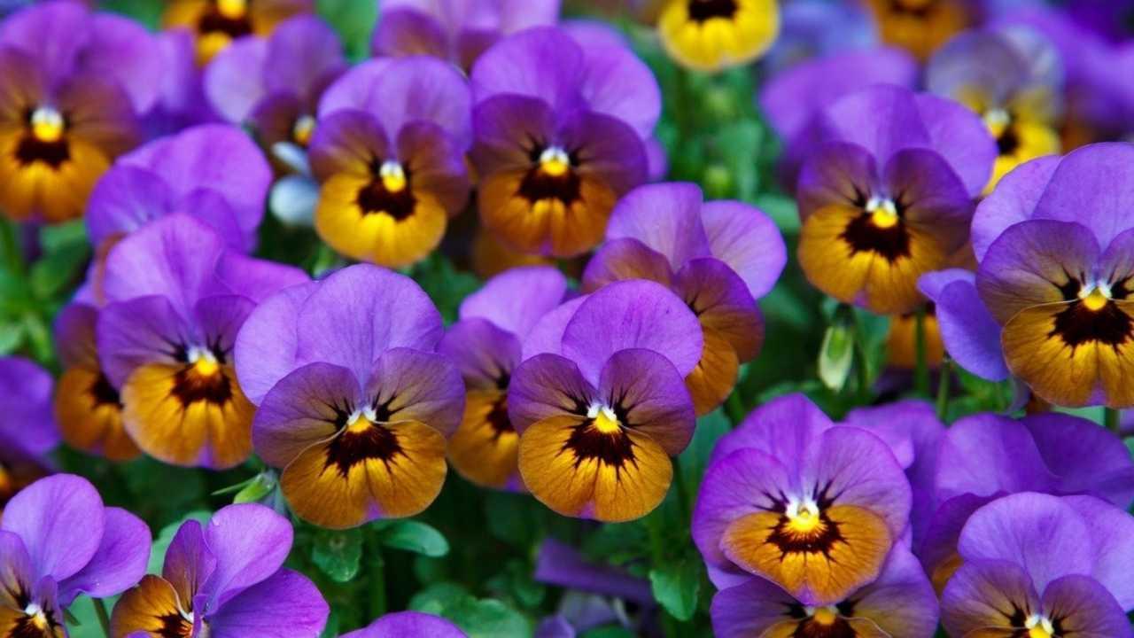 Beautiful Winter Flowers in India